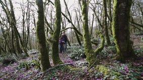 Dos personas jovenes están caminando profundamente en el bosque en el día soleado almacen de metraje de vídeo