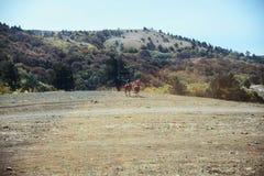 Dos personas montan a caballo hacia el bosque en una meseta de la montaña Imagen de archivo libre de regalías
