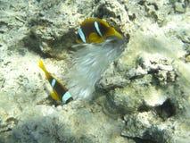 Dos pescados Imagen de archivo