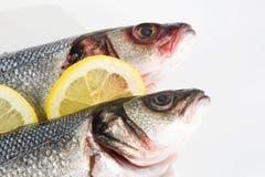 Dos pescados Imagenes de archivo