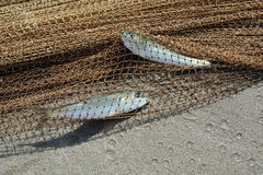 Dos pescados catched fotos de archivo