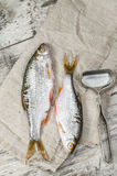 Dos pescados de las cucarachas en una servilleta de lino. Foto de archivo libre de regalías