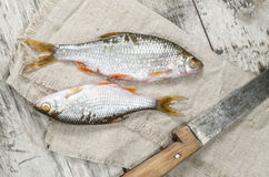 Dos pescados de las cucarachas en una servilleta de lino. Fotos de archivo libres de regalías