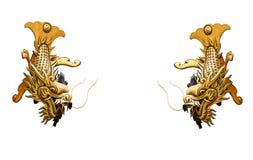 Dos pescados de oro del dragón aislados en el fondo blanco Imagenes de archivo