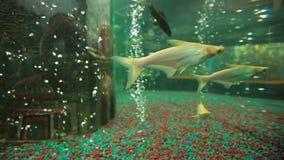 Dos pescados del payaso metrajes