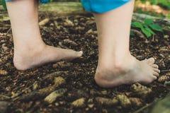 Dos pies femeninos pasan conos del pino imagen de archivo libre de regalías