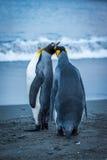 Dos pingüinos de rey que tocan los picos en la playa Imagenes de archivo