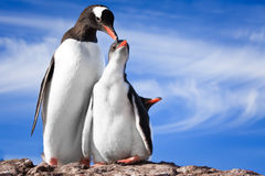 Dos pingüinos en Ant3artida Imagenes de archivo