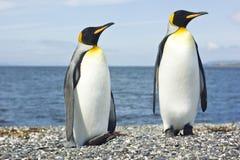 Dos pinguins del rey acercan al mar Foto de archivo libre de regalías