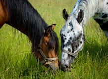 Dos pistas de caballos Foto de archivo