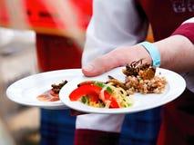 Dos placas de comida del insecto Imagen de archivo libre de regalías