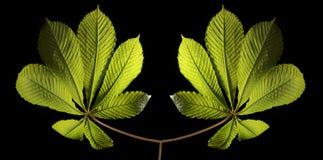 Dos plantas conectadas Fotos de archivo libres de regalías