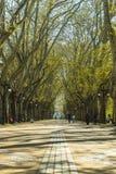 Dos Platanos Alameda Стоковые Изображения