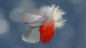 Dos plumas Fotos de archivo libres de regalías