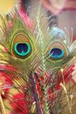 Dos plumas Imagen de archivo libre de regalías
