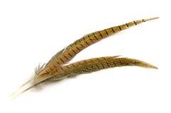 Dos plumas marrones aisladas en blanco Foto de archivo libre de regalías