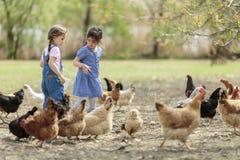 Dos pollos de alimentación de la niña foto de archivo libre de regalías