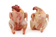 Dos pollos sin procesar Fotos de archivo