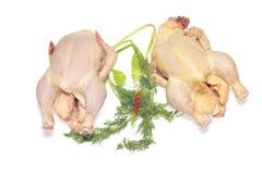 Dos pollos sin procesar aislados Imagenes de archivo