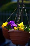 Dos potes colgantes con las flores violetas Imágenes de archivo libres de regalías