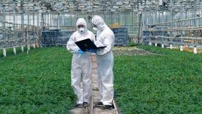 Dos químicos están entre las plantas con un ordenador portátil metrajes
