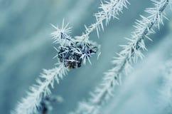 Dos ramas con la fruta cubierta con los cristales de hielo congelados Foto de archivo libre de regalías