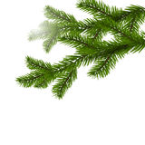 Dos ramas spruce verdes realistas Ramas spruce de la Navidad en el ejemplo de la Navidad blanca Imágenes de archivo libres de regalías