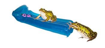 Dos ranas el vacaciones de verano Imagen de archivo