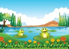 Dos ranas juguetonas en la charca stock de ilustración