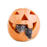Dos ratón y calabaza Halloween Fotos de archivo libres de regalías
