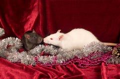 Dos ratas en fondo rojo del terciopelo Imágenes de archivo libres de regalías