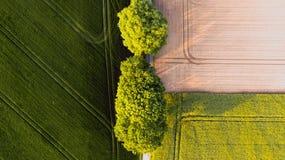 Dos ?rboles verdes grandes entre un campo amarillo marr?n y un campo verde foto de archivo libre de regalías