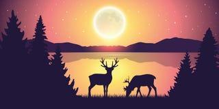 Dos renos por el lago en la noche con la Luna Llena y el paisaje estrellado de la naturaleza del cielo ilustración del vector