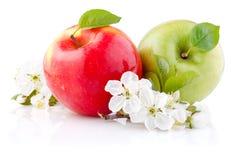 Dos rojos y manzanas verdes con las hojas y las flores Imagenes de archivo