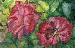 Dos rosas libre illustration