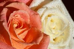 Dos rosas con descensos del agua en los pétalos Fotos de archivo