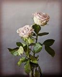 Dos rosas del vintage, aún interior de la vida Fotos de archivo