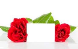 Dos rosas rojas y carte cadeaux en blanco para el texto en el fondo blanco Imágenes de archivo libres de regalías
