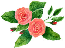 Dos rosas rosadas Foto de archivo