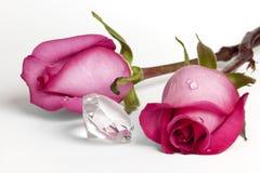 Dos rosas rosadas y diamante cristalino grande Fotografía de archivo libre de regalías