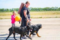 Dos Rottweilers en un paseo con sus dueños fotografía de archivo