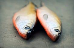Dos señuelos pesqueros suaves realistas grandes fotografía de archivo libre de regalías