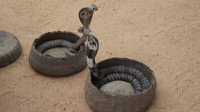 Dos serpientes Fotos de archivo