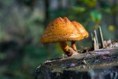 Dos setas en trozo del abedul en el bosque del otoño Imagen de archivo libre de regalías