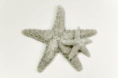 Dos shelles de estrella Fotos de archivo libres de regalías