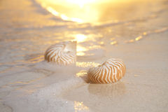 Dos shelles en el mar, salida del sol del nautilus Foto de archivo
