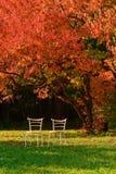 Dos sillas y arce rojo Imagenes de archivo
