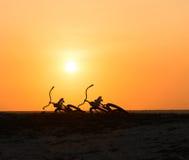 Dos siluetas de las bicis en la puesta del sol tropical Foto de archivo