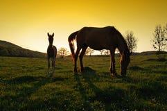 Dos siluetas de los caballos en la puesta del sol Foto de archivo