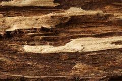 Dos sombrearon la superficie de madera, texturizada y detallada Imagenes de archivo
